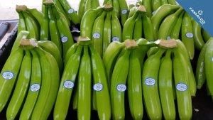Costa Rica Banana Fruitland
